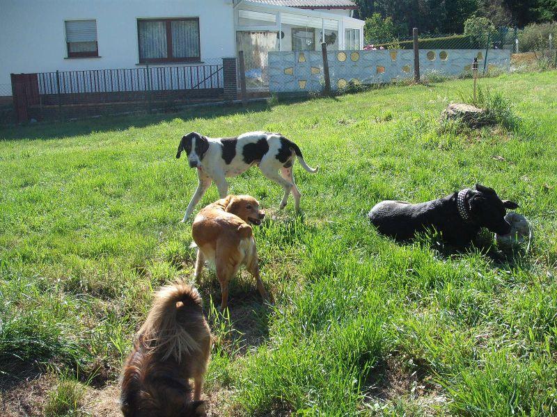 Nouvelles des chiens partis le 9 mai pour l'allemagne et l'autriche Dscf3710