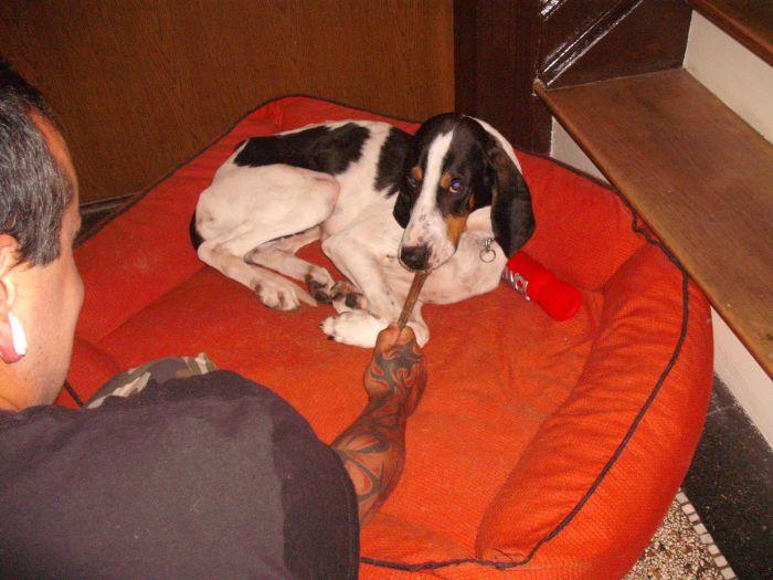 Nouvelles des chiens partis le 9 mai pour l'allemagne et l'autriche Dscf3810