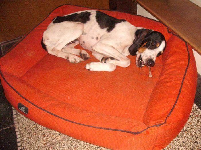 Nouvelles des chiens partis le 9 mai pour l'allemagne et l'autriche Dscf3811