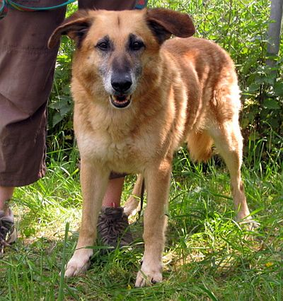Nouvelles des chiens partis le 9 mai pour l'allemagne et l'autriche Enko_210