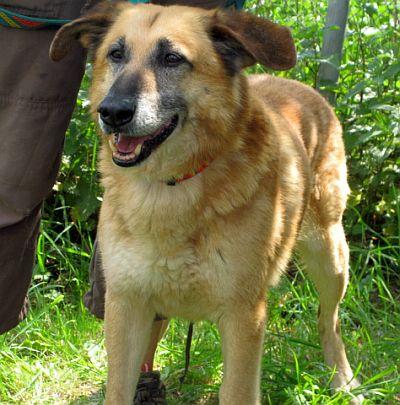 Nouvelles des chiens partis le 9 mai pour l'allemagne et l'autriche Enko_410