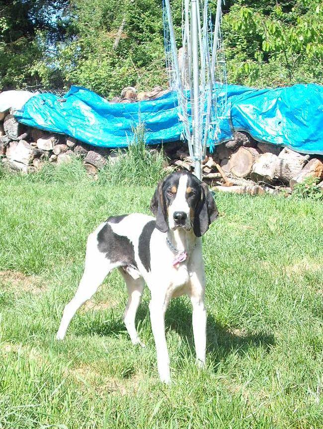 Nouvelles des chiens partis le 9 mai pour l'allemagne et l'autriche Ferdin10