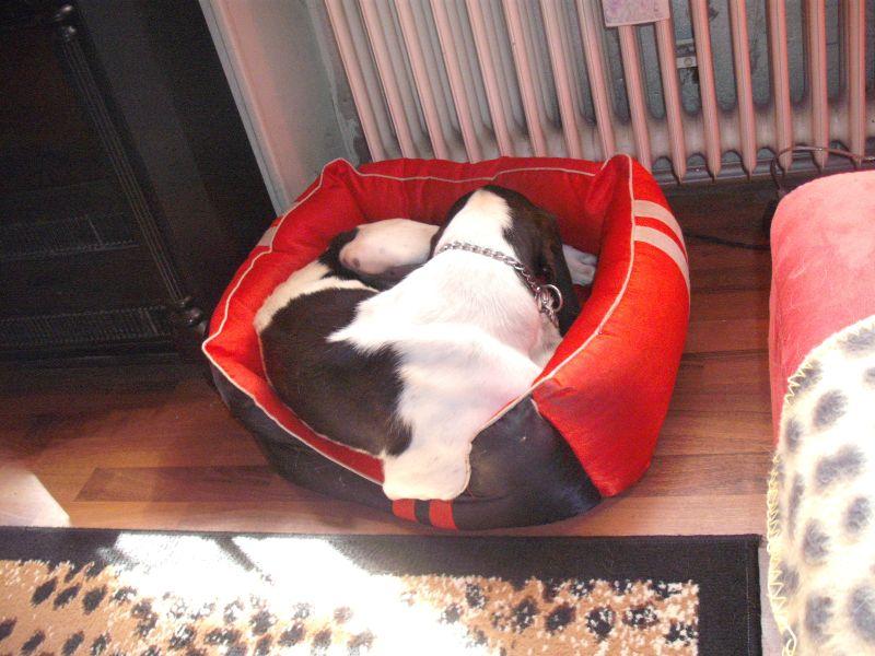 Nouvelles des chiens partis le 9 mai pour l'allemagne et l'autriche Ferdin13