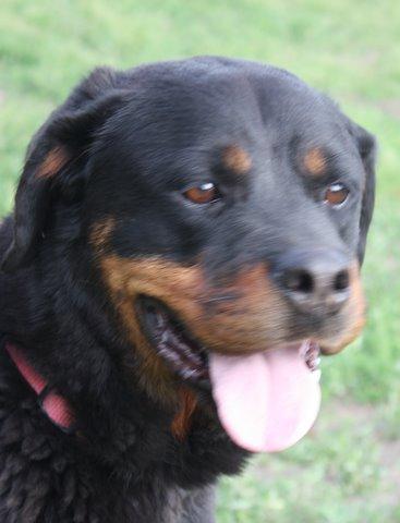 Nouvelles des chiens partis le 13 Mai pour les Pays Bas et l'Allemagne Img_0210