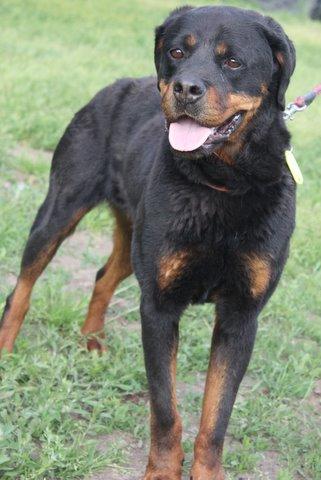 Nouvelles des chiens partis le 13 Mai pour les Pays Bas et l'Allemagne Img_0212