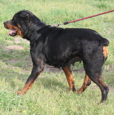 Nouvelles des chiens partis le 13 Mai pour les Pays Bas et l'Allemagne Img_0215