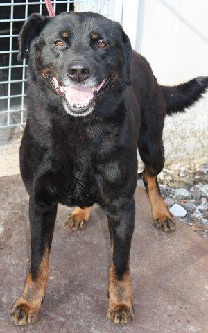 Nouvelles des chiens partis le 13 Mai pour les Pays Bas et l'Allemagne Img_0217