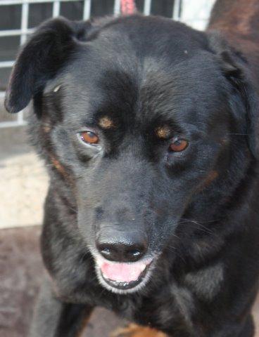 Nouvelles des chiens partis le 13 Mai pour les Pays Bas et l'Allemagne Img_0218