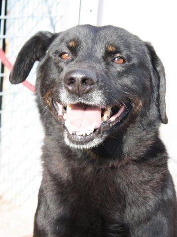 Nouvelles des chiens partis le 13 Mai pour les Pays Bas et l'Allemagne Img_0219