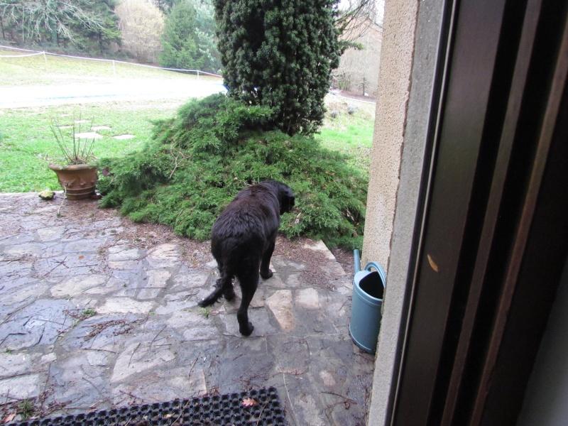 Wolf est en cours d'adoption !!!!!!!!!! Wolf adopté,puis avec son copain Doudou Img_1112