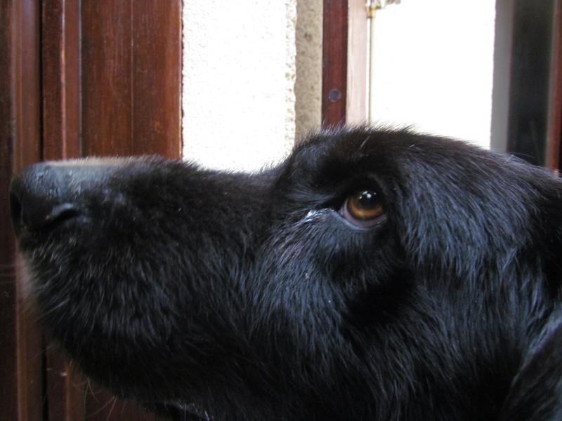 Wolf est en cours d'adoption !!!!!!!!!! Wolf adopté,puis avec son copain Doudou Img_1310