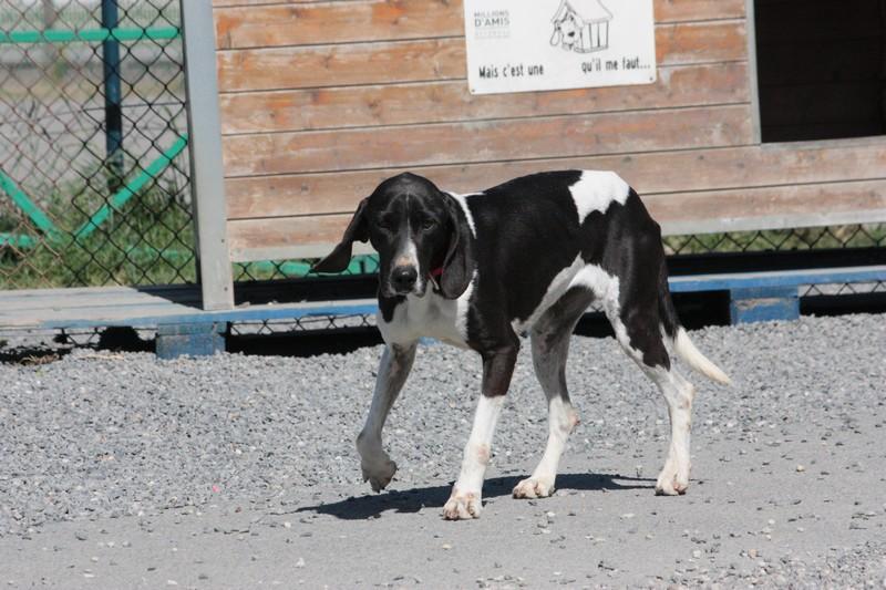 Nouvelles des chiens à Landerneau Img_4411