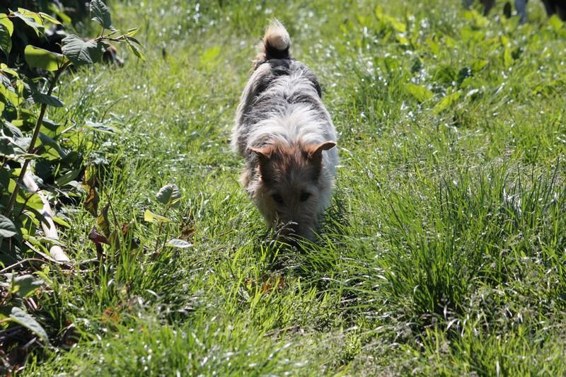 Nouvelles des chiens à Landerneau Img_4412