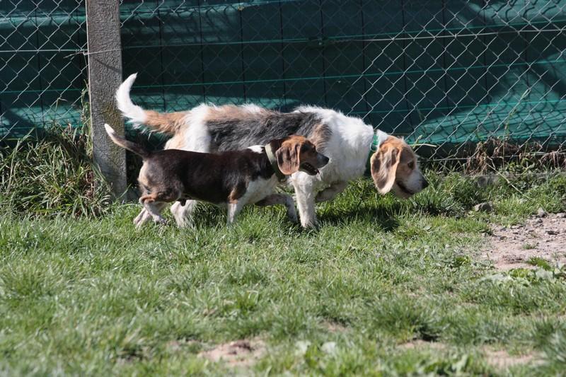 Nouvelles des chiens à Landerneau Img_4413