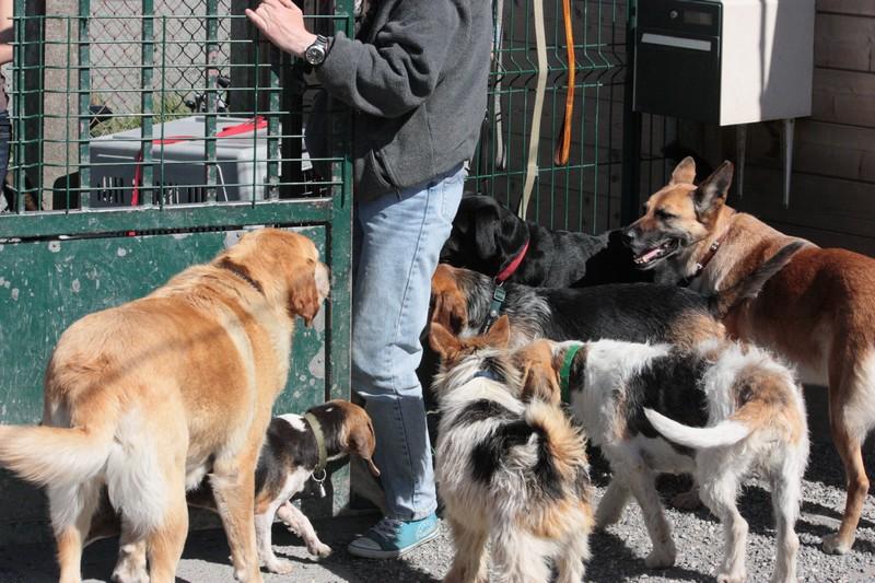 Nouvelles des chiens à Landerneau Img_4510