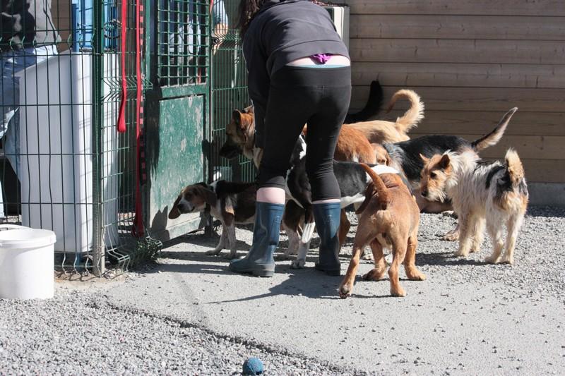 Nouvelles des chiens à Landerneau Img_4511