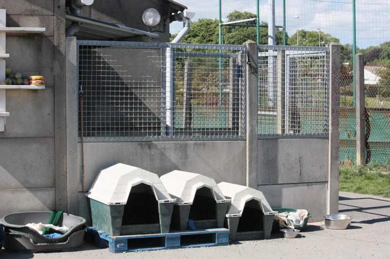 Nouvelles des chiens à Landerneau Img_4513