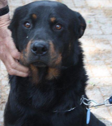 Nouvelles des chiens partis le 13 Mai pour les Pays Bas et l'Allemagne Img_9913