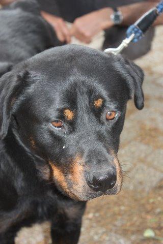Nouvelles des chiens partis le 13 Mai pour les Pays Bas et l'Allemagne Img_9915