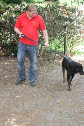 Nouvelles des chiens partis le 13 Mai pour les Pays Bas et l'Allemagne Img_9916