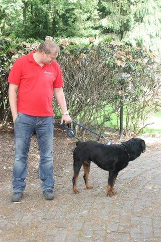 Nouvelles des chiens partis le 13 Mai pour les Pays Bas et l'Allemagne Img_9917