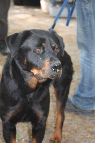 Nouvelles des chiens partis le 13 Mai pour les Pays Bas et l'Allemagne Img_9918
