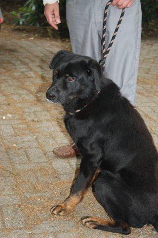 Nouvelles des chiens partis le 13 Mai pour les Pays Bas et l'Allemagne Img_9920