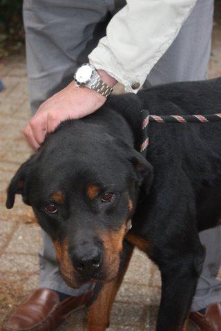 Nouvelles des chiens partis le 13 Mai pour les Pays Bas et l'Allemagne Img_9923