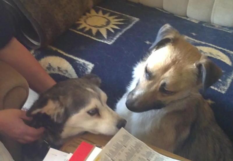 Nouvelles des chiens partis le 13 Mai pour les Pays Bas et l'Allemagne Mai_2011