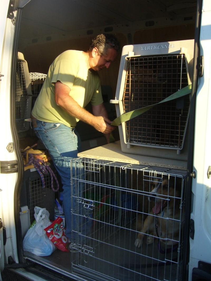 Nouvelles des chiens partis le 13 Mai pour les Pays Bas et l'Allemagne P1080510