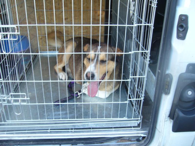 Nouvelles des chiens partis le 13 Mai pour les Pays Bas et l'Allemagne P1080511
