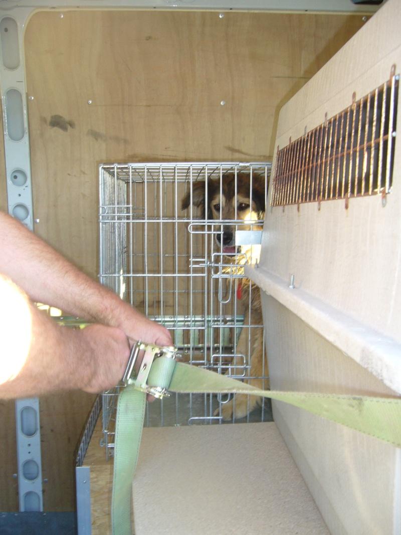 Nouvelles des chiens partis le 13 Mai pour les Pays Bas et l'Allemagne P1080513