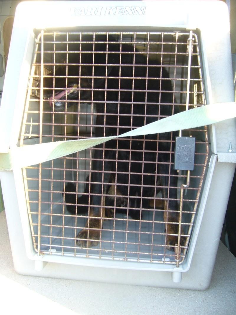 Nouvelles des chiens partis le 13 Mai pour les Pays Bas et l'Allemagne P1080514