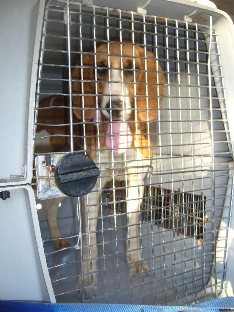 Nouvelles des chiens partis le 13 Mai pour les Pays Bas et l'Allemagne P1080516