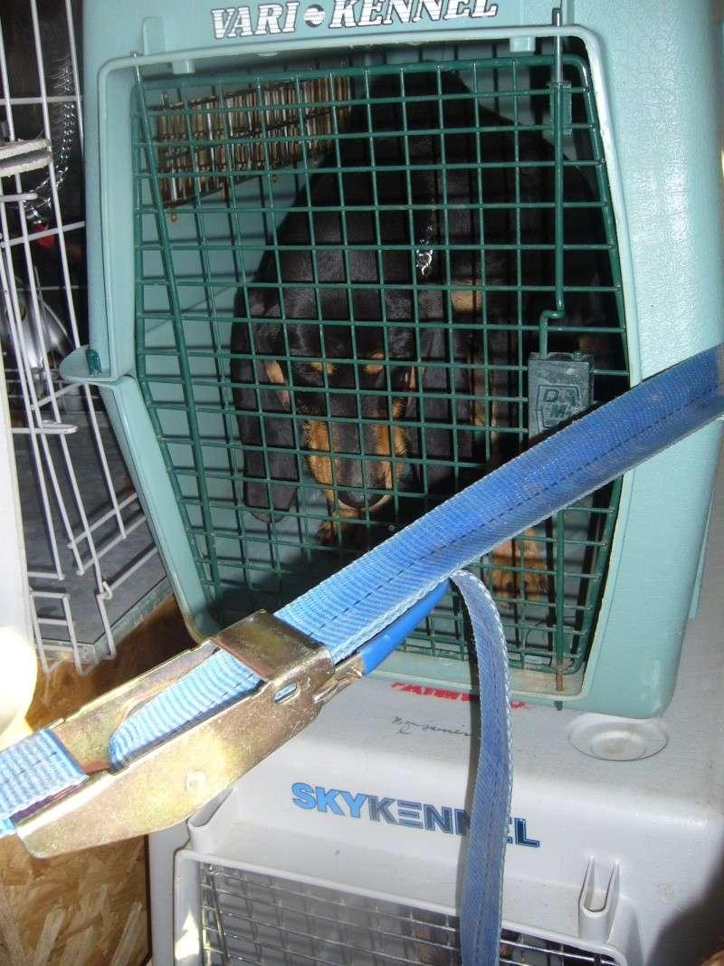 Nouvelles des chiens partis le 13 Mai pour les Pays Bas et l'Allemagne P1080517