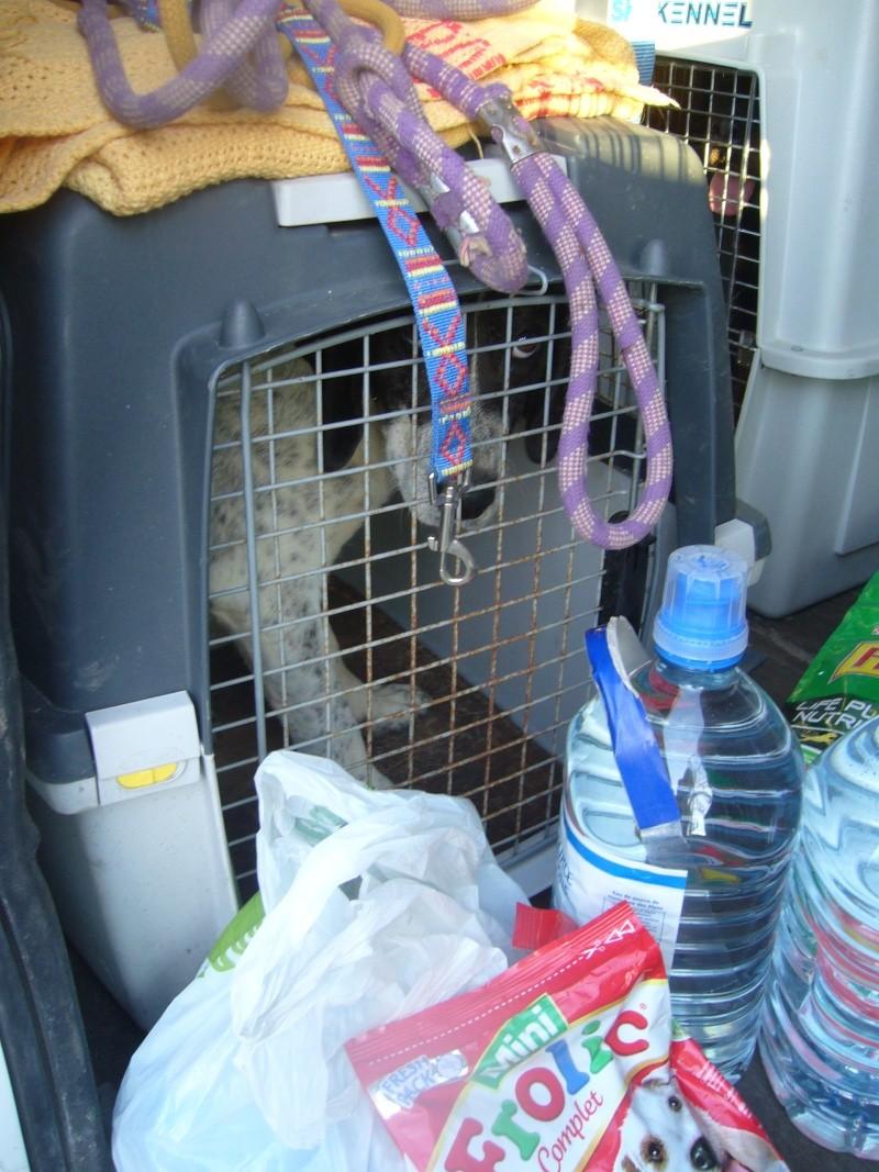 Nouvelles des chiens partis le 13 Mai pour les Pays Bas et l'Allemagne P1080518