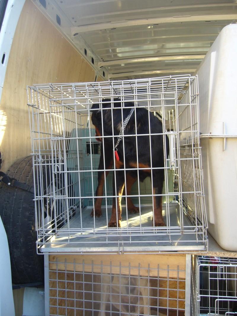 Nouvelles des chiens partis le 13 Mai pour les Pays Bas et l'Allemagne P1080519