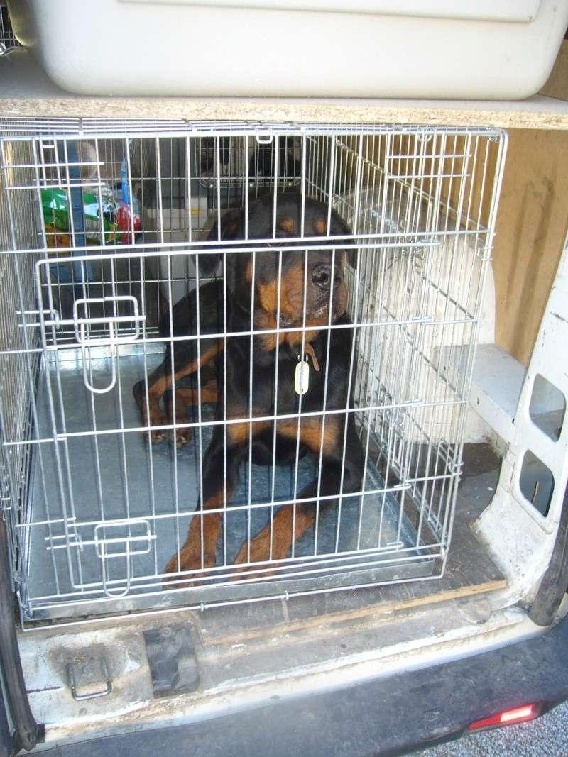 Nouvelles des chiens partis le 13 Mai pour les Pays Bas et l'Allemagne P1080520