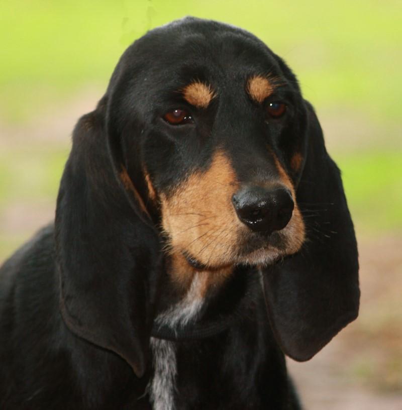 Nouvelles des chiens partis le 13 Mai P110