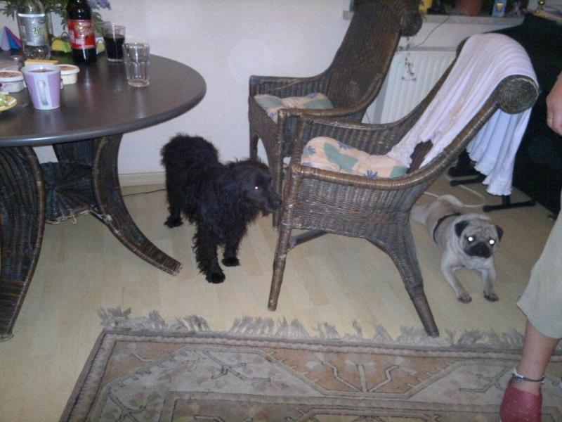 Nouvelles des chiens partis le 9 mai pour l'allemagne et l'autriche Pack_510