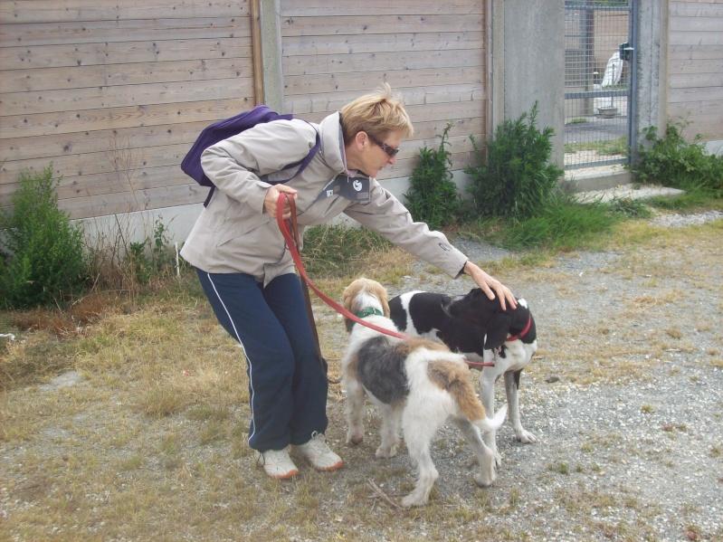 Nouvelles des chiens à Landerneau Photo_18