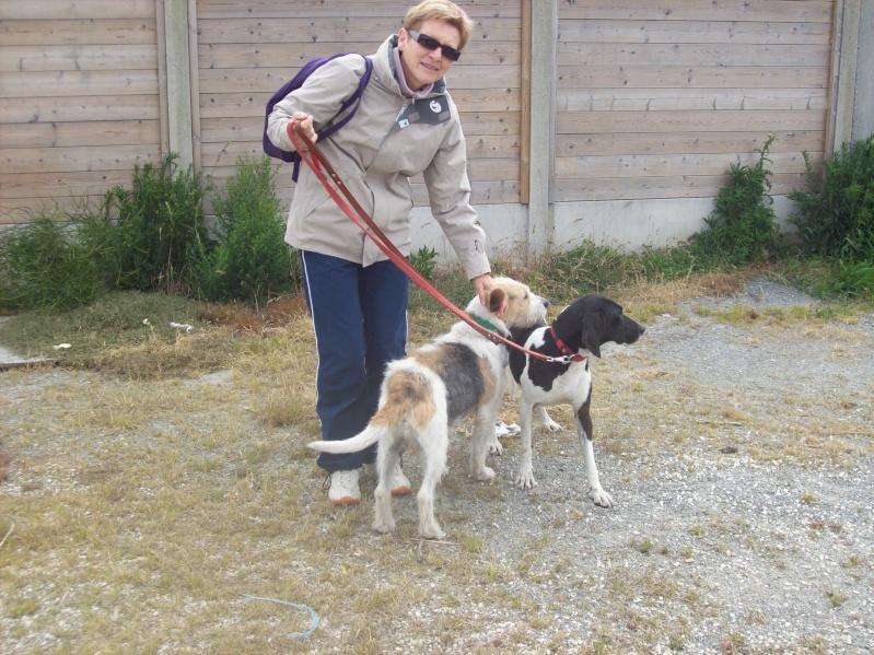 Nouvelles des chiens à Landerneau Photo_19