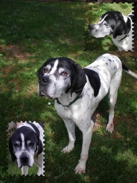 Nouvelles des chiens partis le 13 Mai Prospe10
