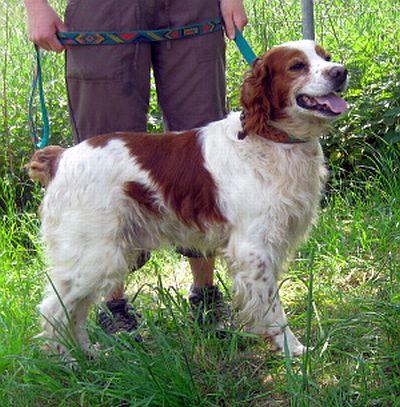 Nouvelles des chiens partis le 9 mai pour l'allemagne et l'autriche Rocky-10