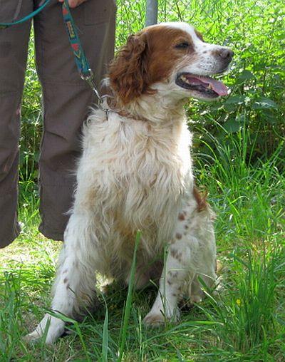 Nouvelles des chiens partis le 9 mai pour l'allemagne et l'autriche Rocky-11