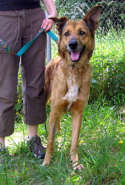 Nouvelles des chiens partis le 9 mai pour l'allemagne et l'autriche Tina_610