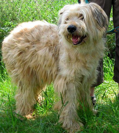 Nouvelles des chiens partis le 9 mai pour l'allemagne et l'autriche V2_sim10