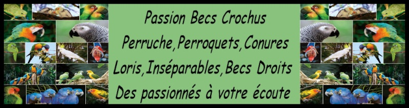passion becs crochus - Portail Essai210