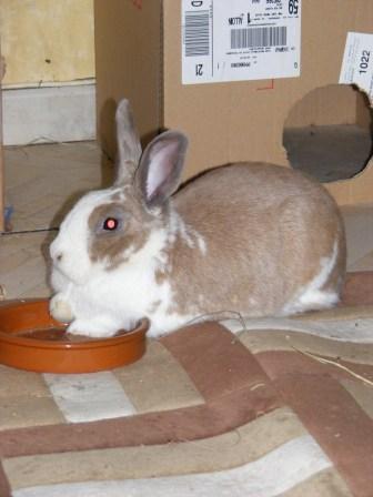 Charlotte,  lapine stérilisée, née en 2009 - Page 3 Chats_10
