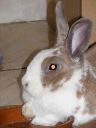 Charlotte,  lapine stérilisée, née en 2009 - Page 3 Chats_11